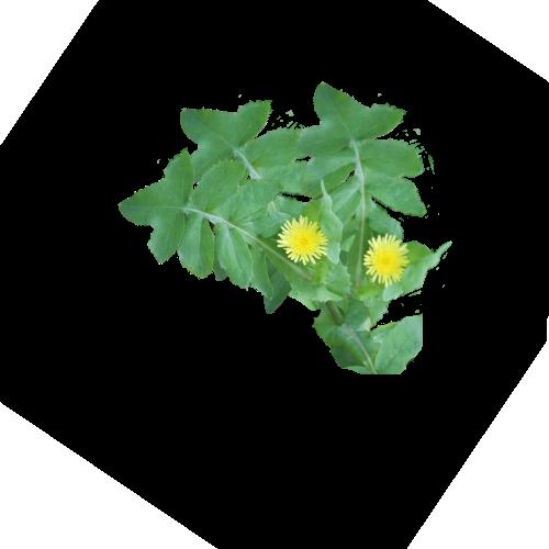 Brède Lastron Doux